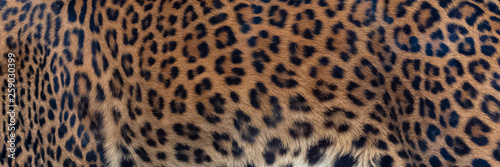Door stickers Leopard Leopard, panther, the skin, unique pattern on the skin