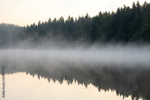 Poster Morning with fog Misty lake and forest reflection