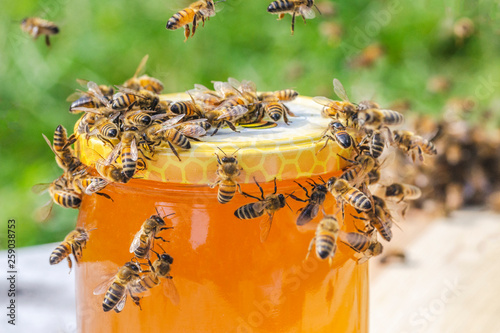 Photo swarm of bees around a jar full of honey in apiary