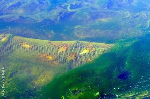 Photo  trampas para cangrejos de rio