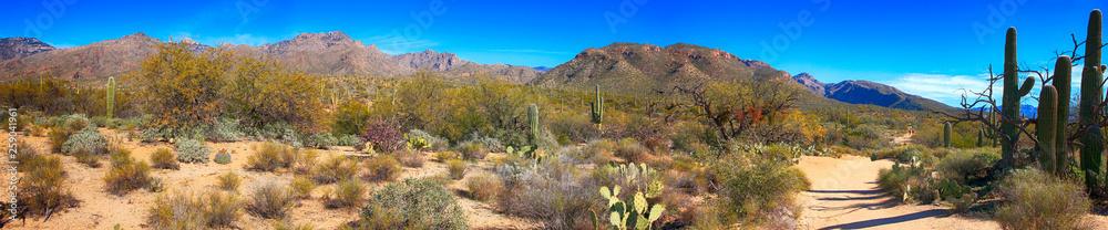 Fototapety, obrazy: Sabino Canyon in Tucson, Arizona