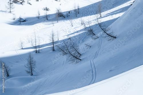 Photo  traces snow dolomiti italy winter trees skiing
