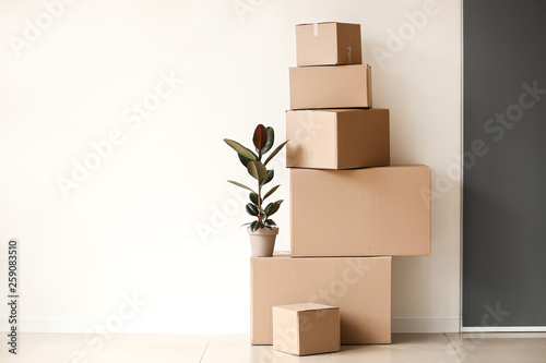 Moving boxes with plant near light wall Fototapeta