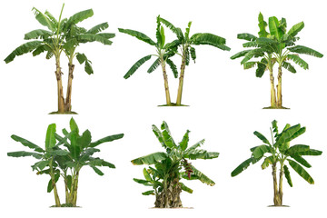 banana trees collection isolated on a white background