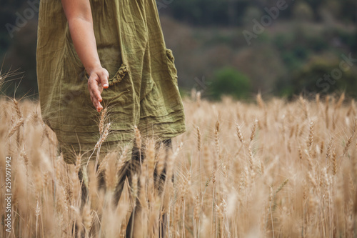 Leinwand Poster Woman hand touching the ears of wheat with tenderness in the barley field