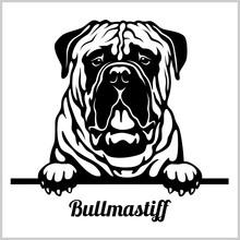 Bullmastiff - Peeking Dogs - B...