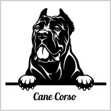 Cane Corso - Peeking Dogs - Breed Face Head Isolated On White