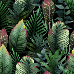 FototapetaWatercolor seamless pattern of tropical palm and leaves on dark