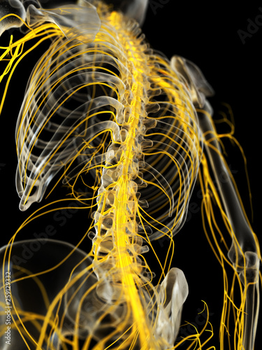 Fotografía 3d rendered medically accurate illustration of the spinal cord