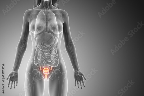 Fényképezés 3d rendered medically accurate illustration of a womans uterus