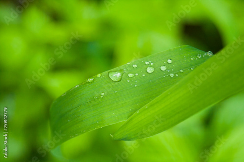 Poster Nature Water drops on green grass and foliage. Nature background. After the rain. Weather forecast rain. Green grass in summer. Macro shooting of water and plants.