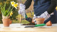 Outdoor Portrait Of A Gardener Planting Flower In A Ceramic Pot