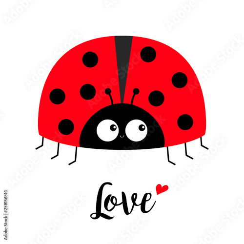 Fotografija Red lady bug ladybird icon