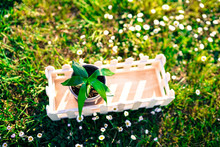 Wooden Box With Brown Pottery Laying On The Grass In Sunlight. Small Seedling Growing Inside Pottery. Plant New Life
