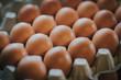 braune Eier im Eierkarton, selektive Schärfe