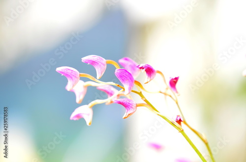 Poster Orchid Orchidee 1