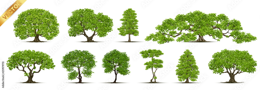 Fototapety, obrazy: Trees Isolated on White Background