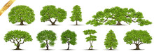 Trees Isolated On White Backgr...