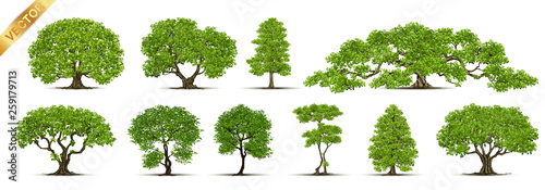 Trees Isolated on White Background - 259179713