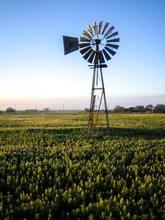 South African Windmill In A Field On A Farm In The Morning