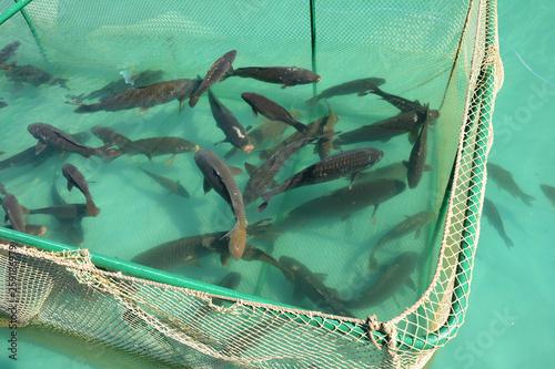 Photo Cage for fish farming. Sea fish farm.