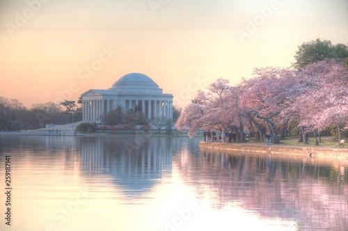 Photo sur Toile Lieux connus d Amérique Cherry blossoms in Washington DC