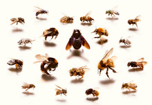 Types Of Bees Against White Background
