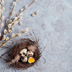 Naklejka na ściany i meble Quail Easter eggs on grey background with willow branch