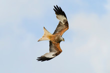 Red Kite Flying Against Cloudy...