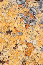 Close Up Of Lichens On Rock