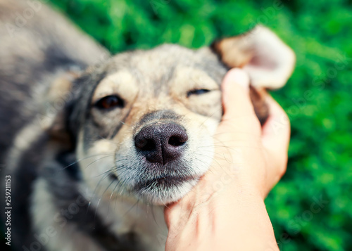 Fotografia cute brown puppy laid his head on the man's hand and covered his eyes with pleas
