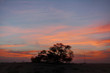 """A 400 year-old mesquite tree during sunset. the tree is named as """"Tree of life"""""""