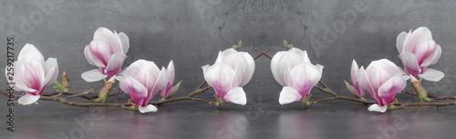 Poster Magnolia Wunderschöner blühender Magnolienzweig Panorama