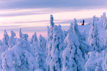 Person With Tripod Stands Above Snow Covered Trees