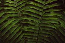 Green Plants Background