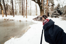 Spanish Greyhound Walking By A Freezed Little Lake