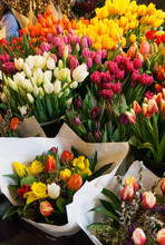 Pretty And Colorful Spring Tulips In Seattle's Public Market
