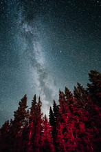Red Trees Under Milky Way Galaxy