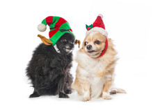 Cute Dog Dressed In A Christmas Costume