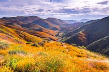 Landscape In Walker Canyon Dur...