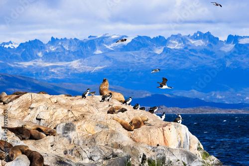 Valokuva  Penguins and Sea Lions in Tierra del Fuego Ushuaia Argentina