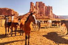 Monument Valley, Utah. Horses In Pen, Camel Butte And Elephant Butte Rock In Background