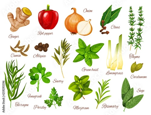 Fototapeta Spices and herbs icons of food ingredients obraz