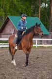 Fototapeta Konie - Horse riding lessons for beginners