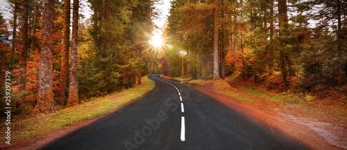 Route sinueuse en automne à travers la forêt Canvas Print
