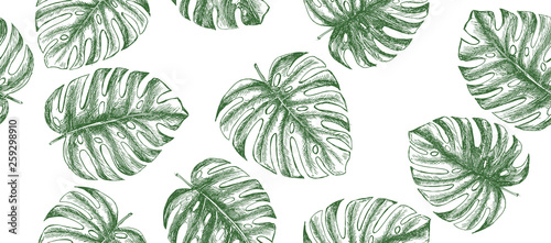 Photo Stands Asia Country Tropical leaves hand drawn