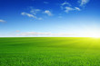 canvas print picture - Green meadow and sun.