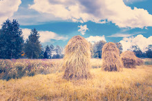 Old Style Hay Poles In Field. Photo From Kuhmo, Finland.