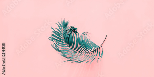 Poster Fleur Tropical Curl Palm Leaf Background Flat Lay Top