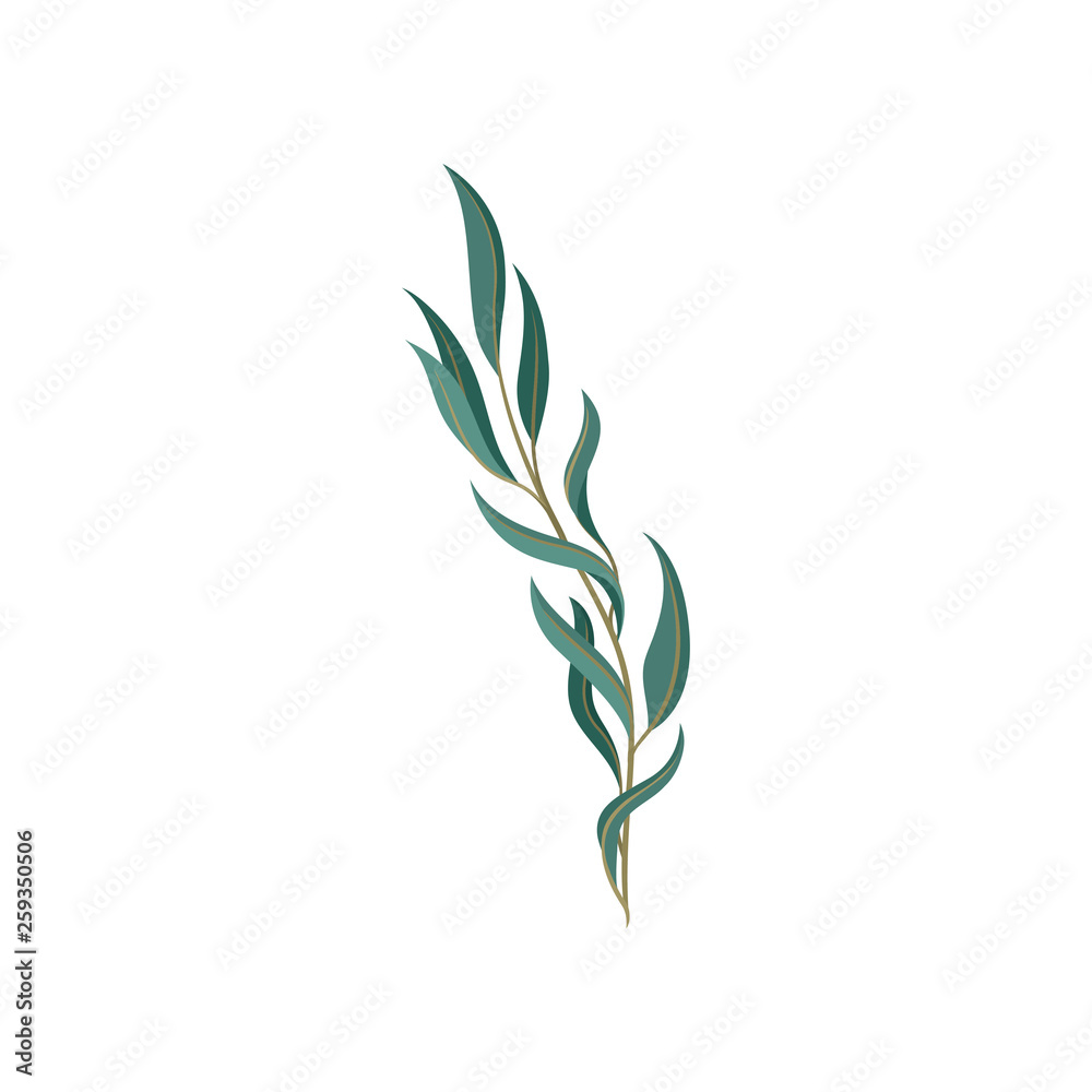 Fototapeta Young willow tree branch with green foliage.